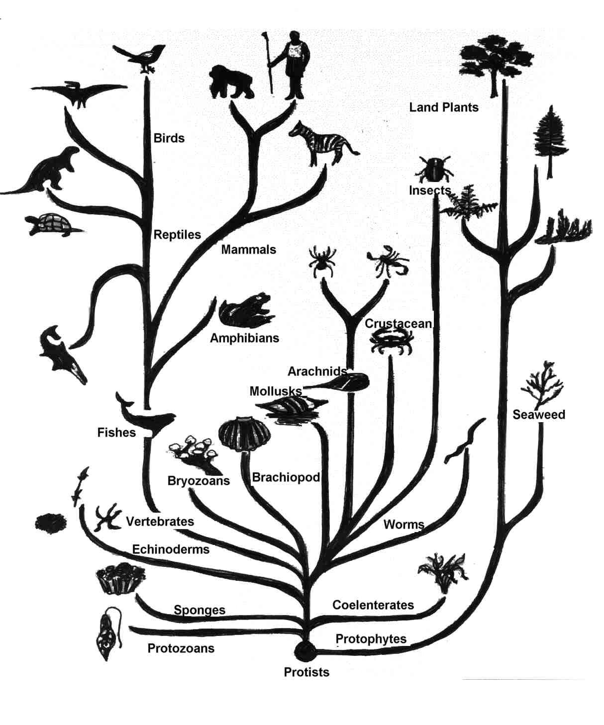 Почему мхи представляют собой тупиковую ветвь эволюции